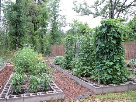 My garden a few years ago. I miss it!