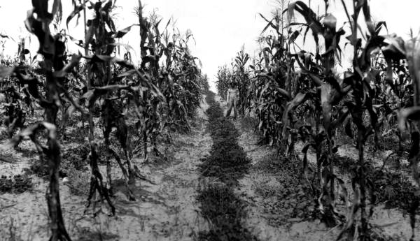 Farmer-CornField-rc13706